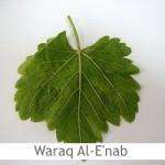 Dimah - http://www.orangeblossomwater.net - Waraq Al-E'nab